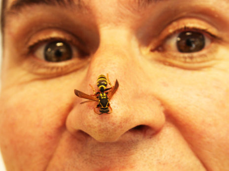 You don't have to pay through the nose to get rid of wasps - just call in PestCo's Mike Wills.