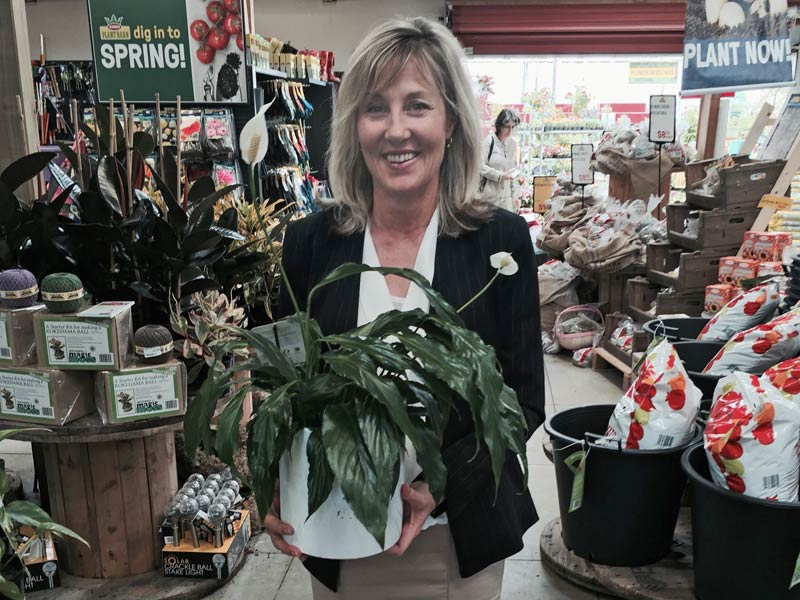 Karen Barnett with an anthurium plant all set for delivery.