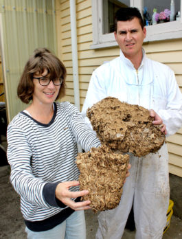 PestCo service technician Mike Wills and Gemma Melville-Barton with part of the huge wasp nest he removed from the Tauranga property. The nest, seen partially exposed, was the size of six rugby balls.