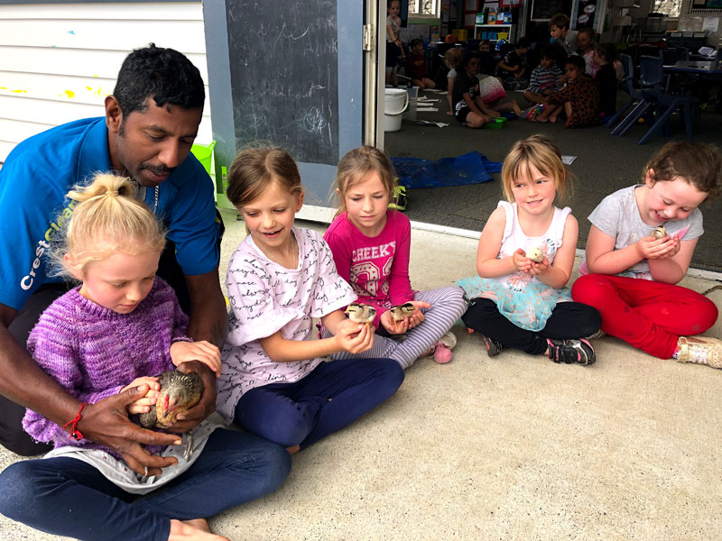 CrestClean's Salendra Chetty shows youngsters how to handle the hen and chicks.